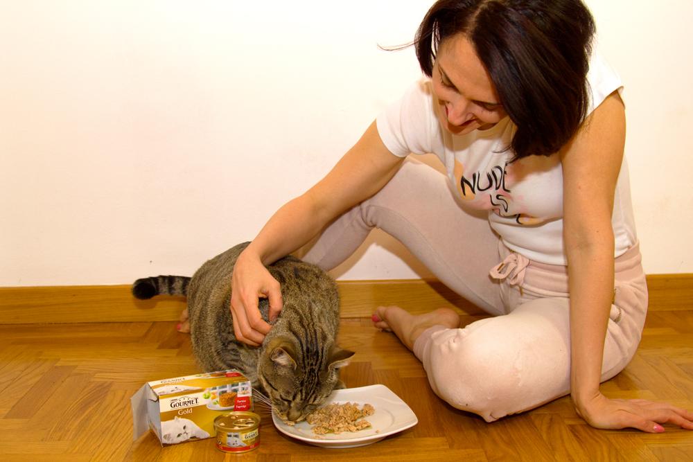 Gatti: come premiare il loro affetto nei nostri confronti