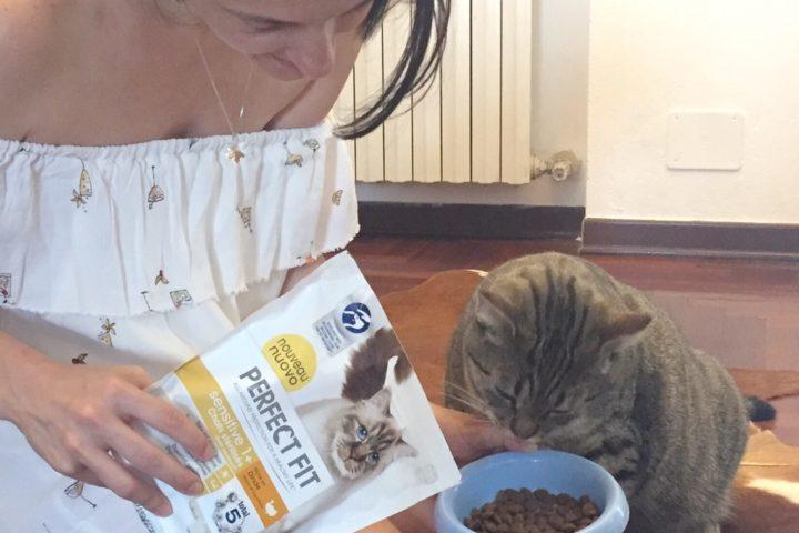 gatti felici