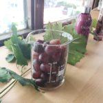 Thé des Vignes Caudalie: una coccola idratante e antiossidante per il corpo